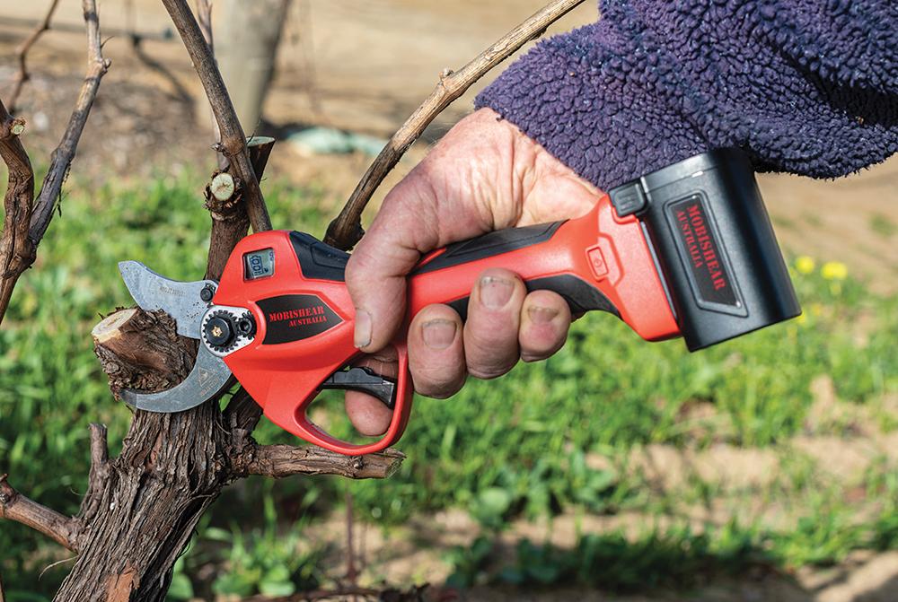 Cordless pruning snips being used in an Australian vineyard